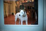 pepper-koira-9618